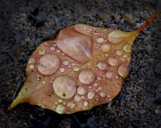 Dew Drop Prints - Dew Drops Print by Craig Incardone