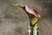 Textured Floral Prints - Dew of a Lily Print by Darren Fisher