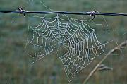 Arkansas Metal Prints - Dew on the Web Metal Print by Douglas Barnett