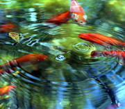 Fish Photo Prints - Deziis Pond Print by Jennifer  Diaz