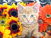 Kitteh Prints - Di Milo - Sun Flower Kitten with Blue Eyes - Kitty Cat in Fall Autumn Colors with Gerbera Flowers Print by Chantal PhotoPix