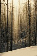 Woodland Scenes Posters - Diamond Dust Ice Crystals Cover A Stand Poster by Tom Murphy