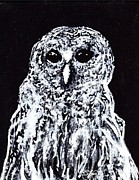 Black And White Owl Paintings - Diamond eyes by Ben Leary