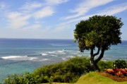 Diamond Head Framed Prints - Diamond Head Tree Framed Print by Andrew Dinh