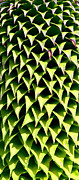 Abstract Flowers Photos - Diamond Leaves  by Aidan Moran