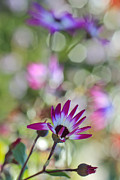 Senetti Metal Prints - Different Metal Print by Heidi Smith