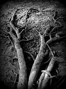 Deep Roots Framed Prints - Digg Deep Framed Print by Lisa McDowell