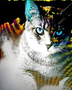 Animal Shelter Digital Art - Digital Flash by Jennifer Choate