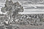 Abstract - Digital Sketch Overhangs the Grand Canyon by Darcy Michaelchuk