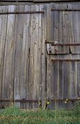 Wooden Shed Framed Prints - Dilapidated Antique Timber Doors Framed Print by Jason Edwards
