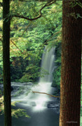Michelle Wiarda - Dingmans Falls Dingmans Ferry Pennsylvania