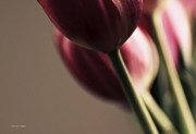 Greens Framed Prints Metal Prints - Dinner is Served Tulips Metal Print by Jayne Logan