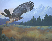 Red Tail Hawk Paintings - Dinner Time by Diana Mahnke