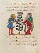 Arab Framed Prints - Dioscoridess De Materia Medica Framed Print by Science Source