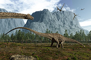 Mesozoic Era Posters - Diplodocus Dinosaurs Graze While Poster by Walter Myers