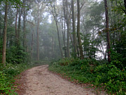 Bent Photos - Dirt Path in Forest Woods with Mist by Olivier Le Queinec