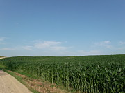 Simplistic Originals - Dirt Road Cornfield by Brian  Maloney