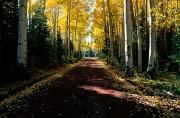 Dirt Roads Photos - Dirt Road Leading Through A Grove by Joyce Dale