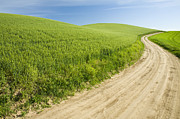 Dirt Road Posters - Dirt Road Through Field, Palouse, Washington Poster by Paul Edmondson