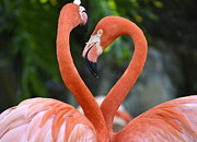 Flamingos Prints - Disconnected Heart Print by Fraida Gutovich