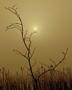 Taupe Photos - Distant Sun by Odd Jeppesen