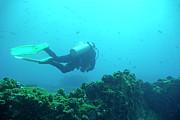 Sami Sarkis - Diver by rocks on ocean floor