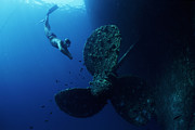 Free Diving Prints - Diver By Shipwrecks Propeller Print by Alexis Rosenfeld