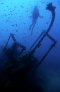Schools Metal Prints - Diver exploring the Dalton Shipwreck with a school of fish swimming Metal Print by Sami Sarkis
