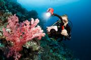 Strobe Art - Diver Photographing Soft Coral by Dave Fleetham