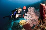 Awesome Prints - Diver Photographing Tube Sponge Print by Dave Fleetham