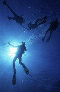 Four People Photos - Divers at safety stop by Sami Sarkis