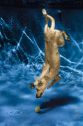 Dog Photo Photos - Diving Dog 2 by Jill Reger