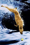 Underwater Photos Framed Prints - Diving Dog Framed Print by Jill Reger