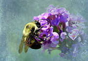 Bumble Bees Posters - Diving In Poster by Betty LaRue