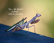 Praying Mantis Photos - Divorce Is Final by Patrick Witz