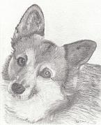 Corgi Drawings - Dixie by Bari Titen