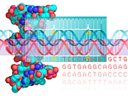 Outcome Prints - Dna Analysis Print by Laguna Design