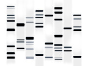 Chemistry Prints - DNA Art Black on White Print by Michael Tompsett