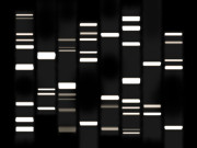 Genealogy Prints - DNA Art White on Black Print by Michael Tompsett