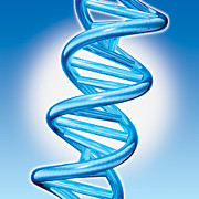 Dna Art - DNA Double Helix by Marc Phares and Photo Researchers