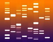 Genetic Prints - DNA purple orange Print by Michael Tompsett