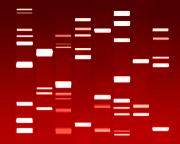Genetic Prints - DNA red Print by Michael Tompsett