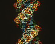 Genes Art - Dna by Science Source