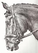 Mane Drawings - Dobbin by Karen  Townsend