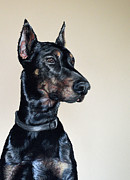Pet Portraits Pastels - Doberman Cuda by Ann Marie Chaffin