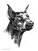 Clip Drawings Prints - Doberman-Pincher-Portrait Print by Gordon Punt