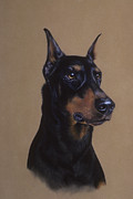 Black Art Pastels Framed Prints - Doberman Pinscher Framed Print by Patricia Ivy