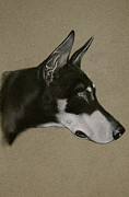 Pinscher Drawings Posters - Doberman Poster by Susan Herber