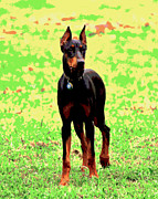 Doberman Pinscher Puppy Prints - Dobie Print by Dorrie Pelzer