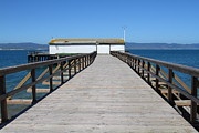 Boardwalks Photo Posters - Dock At Point Reyes Calfornia . 7D16123 Poster by Wingsdomain Art and Photography
